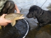 leo-with-bow-river-brown-trout