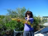 21_-bow-river-brown-trout2153