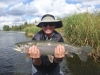 huge-bow-river-rainbow-trout