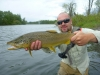 rich-nice-dry-fly-brown-trout