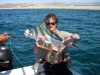 roosterfish-on-fly-3